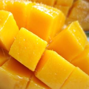 完熟マンゴー超大玉(460g以上)