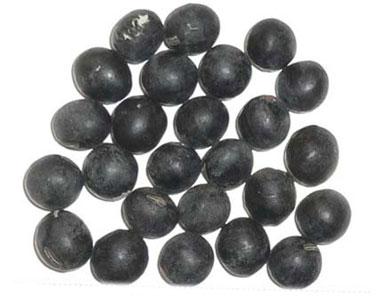 丹波黒豆(生) の商品画像